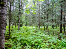 Forest in Amnicon Falls State Park in Wisconsin