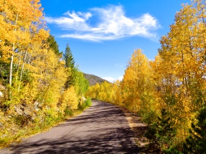 Autumn colors along Barber Lake Road in the Snowy Range in Medicine Bow National Forest in Wyoming