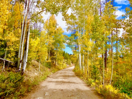 Autumn colors in the Snowy Range in Medicine Bow National Forest in Wyoming